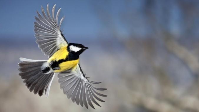 beautiful-bird-flying-hd-wallpaper